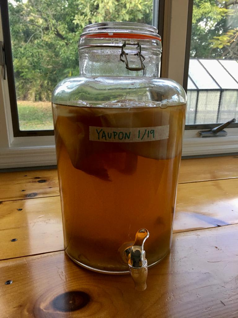 OMG YAUPON KOMBUCHA RECIPE: Yaupon Kombucha from Chef and Fermentation Expert Jackie Vitale