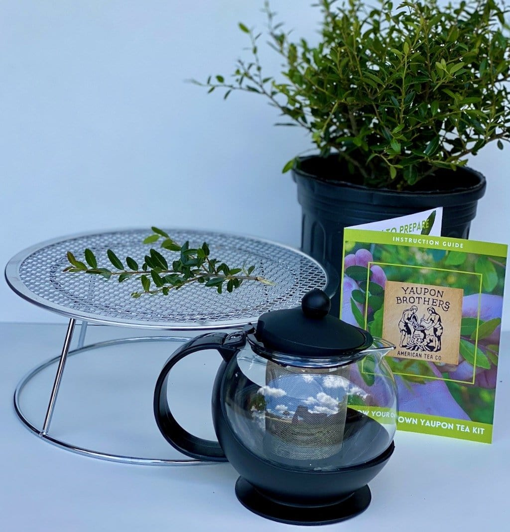 Grow-Your-Own Tea Kit