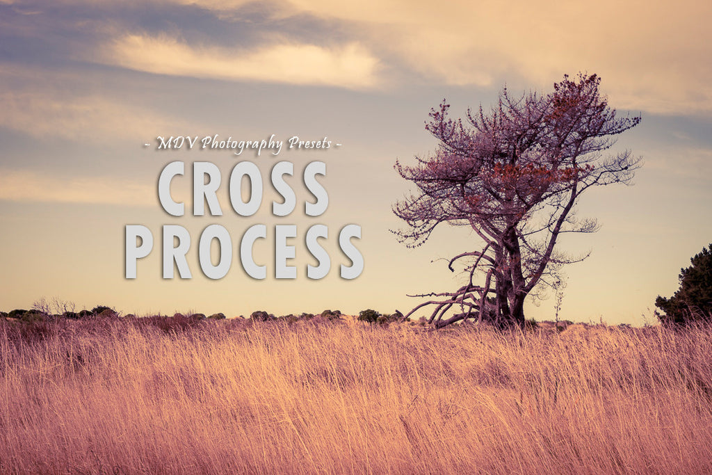 Cross Process - Mode de vie Photography and Photo Presets
