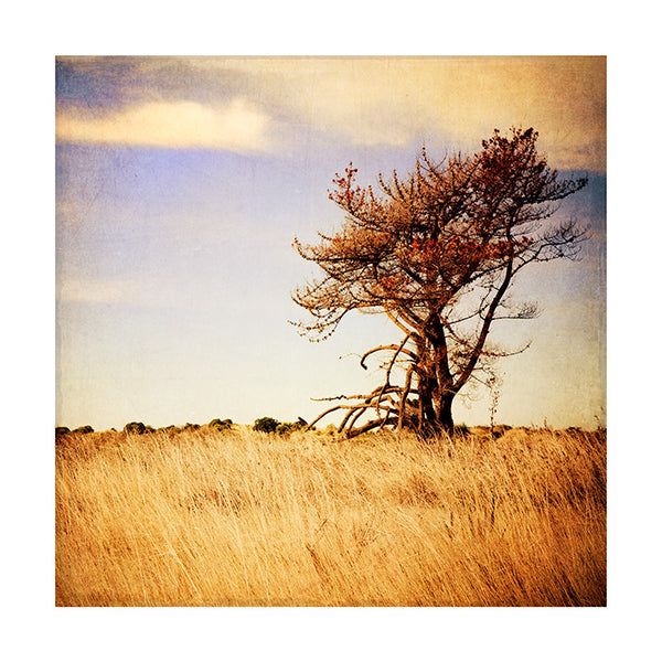 A lone tree cross processed sitting on grasses. Sun, grasses, tree, clouds, blue sky.