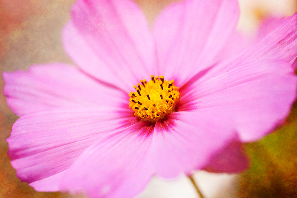 Close up photo of a pink flower with a Photoshop texture added to the image.
