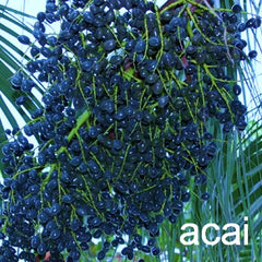 acai for the natural treatment of IBS symptoms