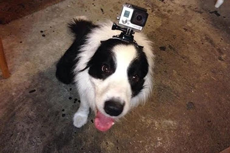 Dog Harness Chest Back Mount Strap Accessories For Gopro 1