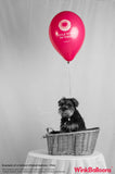 I Can't Bear To Be Without You - Balloon - Delivered*