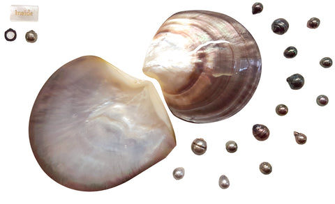 Black Lipped Oyster Two shells, surrounded by Tahitian Pearls of different sizes and shapes