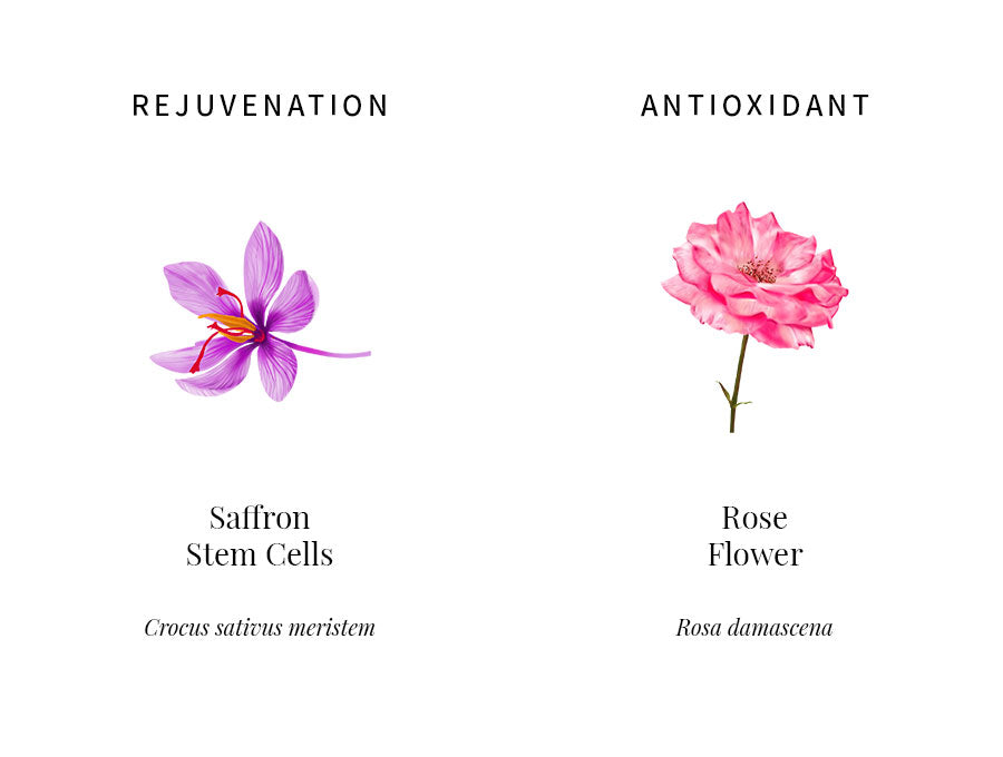 ingredients education, saffron stem cells, rejuvenation, skin elasticity, epidermal repair, rose flower water, antioxidant, oxidative stress, free radical damage, ingredients transparency