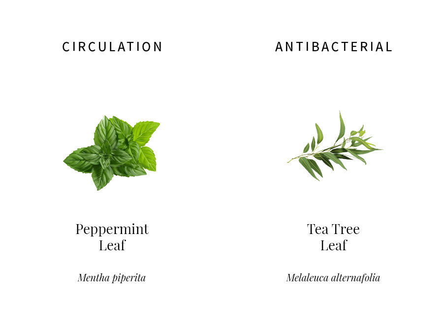 ingredients explanation, peppermint, circulation, tightening, tea tree, antibacterial, acne, sebum control, anti-inflammatory, illustration
