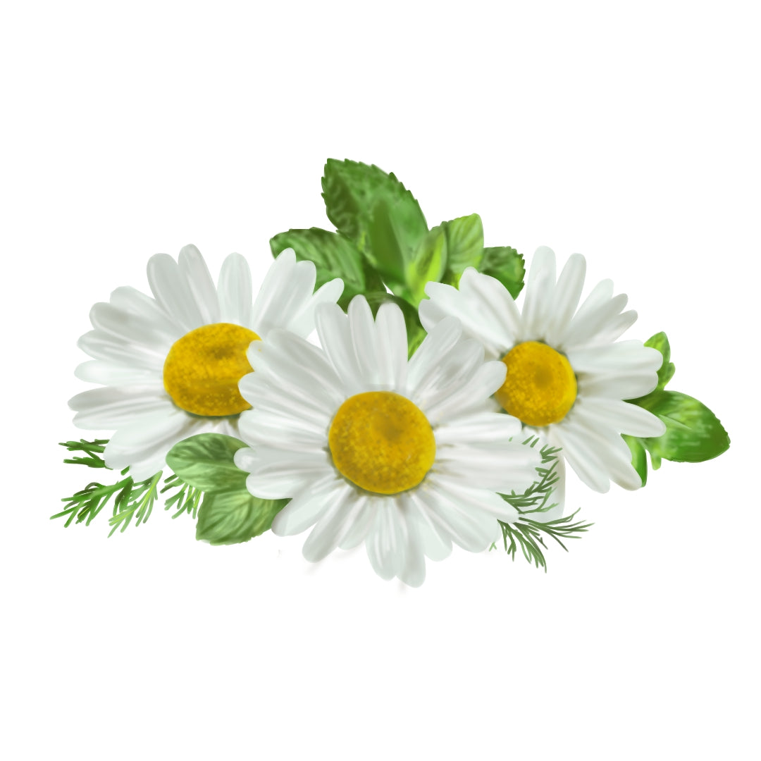 White German Chamomile flowers