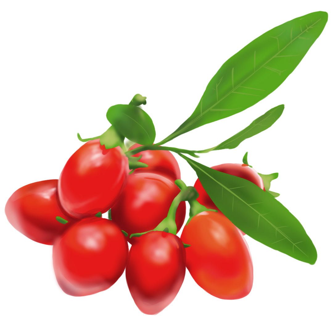 Red goji berry fruit