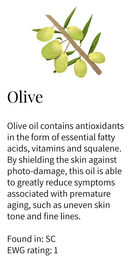 olive, antioxidants, squalene, vitamins, fatty acids, shield, photoprotection, anti-aging, reducing lines, uneven skin tone, Soothe Cleanser