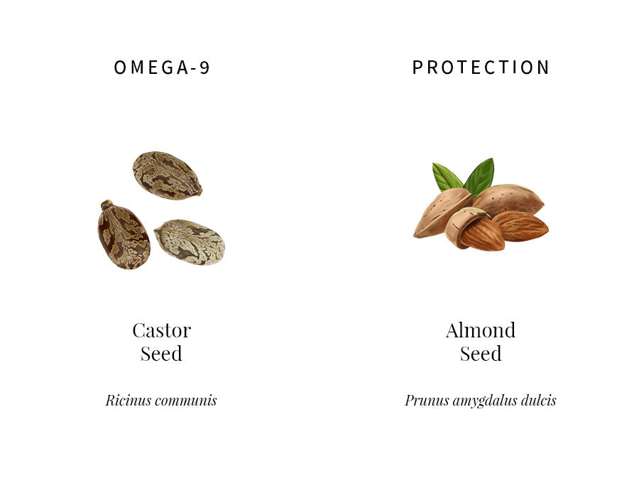 ingredients education, castor seed, omega 9, fatty acid, almond seed, emollient, protection, free radicals fighting, transparency