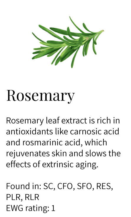 rosemary, antioxidants, rejuvenating, anti-aging