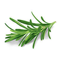 Rosemary herb leaf stalk