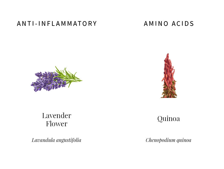 ingredients explanation, lavender, anti-inflammatory, calming, soothing, quinoa, amino acids, plant protein, nutrient, nourishing, transparency