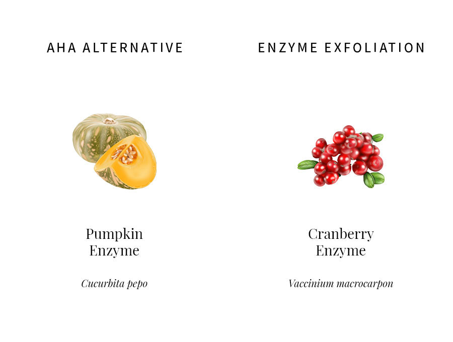 ingredients information, pumpkin enzyme, aha, cranberry enzyme, chemical exfoliation, enzyme, bioactives, illustration