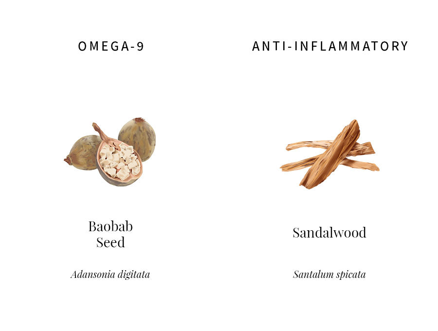ingredients explanation, baobab, omega-9, oleic acid, permeability, absorption, sandalwood, alpha-santalol, anti-inflammatory, calming, dry irritated skin, transparency