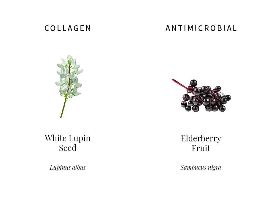 ingredients information, white lupin, collagen synthesis, emollient, protecting, collagen, elderberry, antimicrobial, antioxidants, soothing, illustration