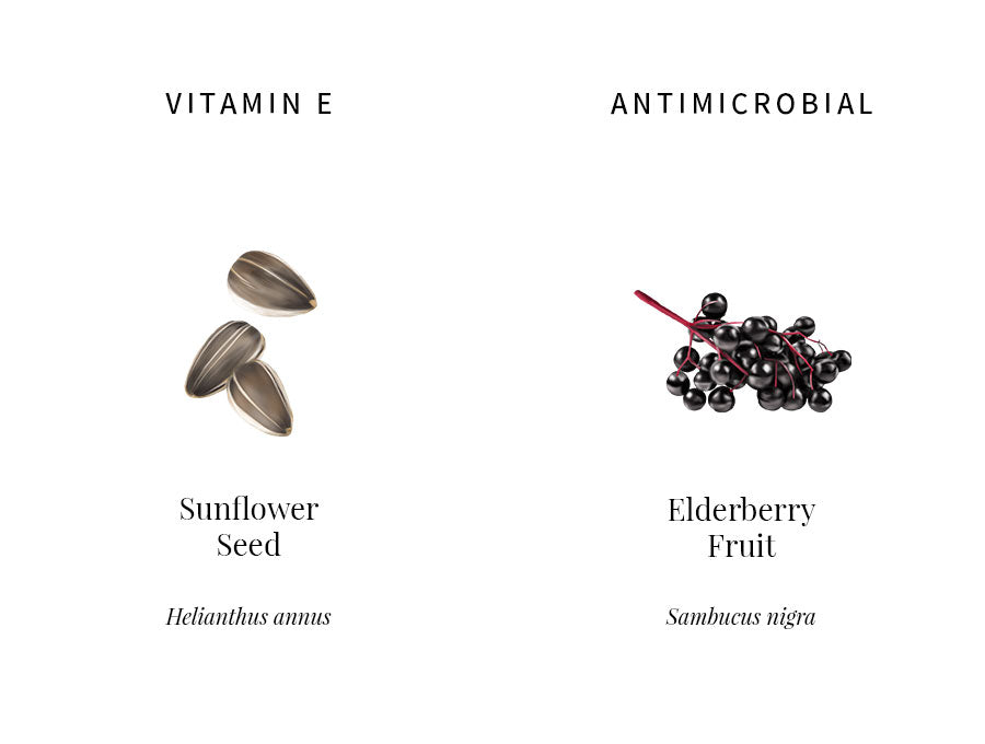 ingredients information, sunflower, vitamin E, emollient, protecting, collagen, elastin, elderberry, antimicrobial, antioxidants, soothing, illustration