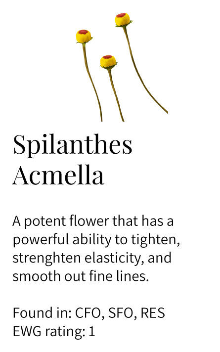 Spilanthes acmella, paracress, flower, tightening, elasticity, smoothening, face oils, eye serum