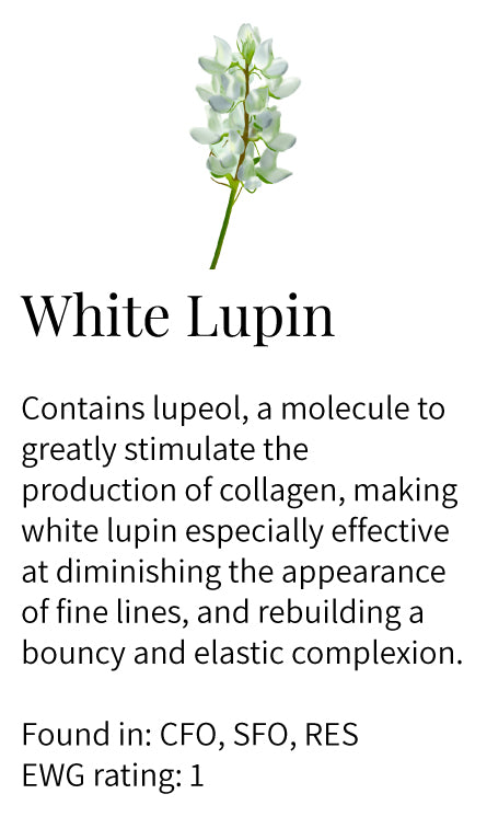 White lupin, lupeol, stimulates collagen, diminishes appearance of fine lines, elastin, bouncy complexion, face oils, eye serum