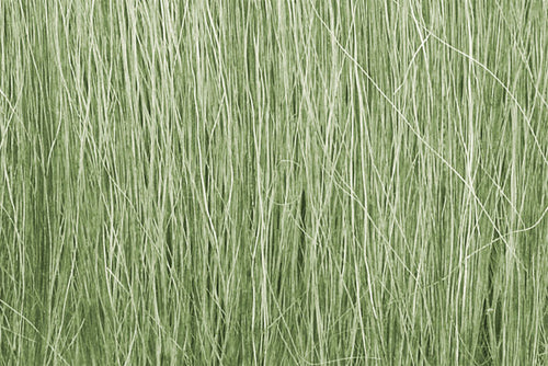 Field Grass Light Green
