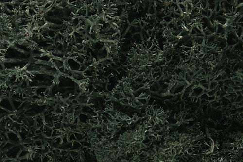LICHEN-DARK GREEN