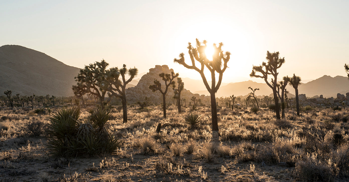 Best Joshua Tree National Park Adventure Blog