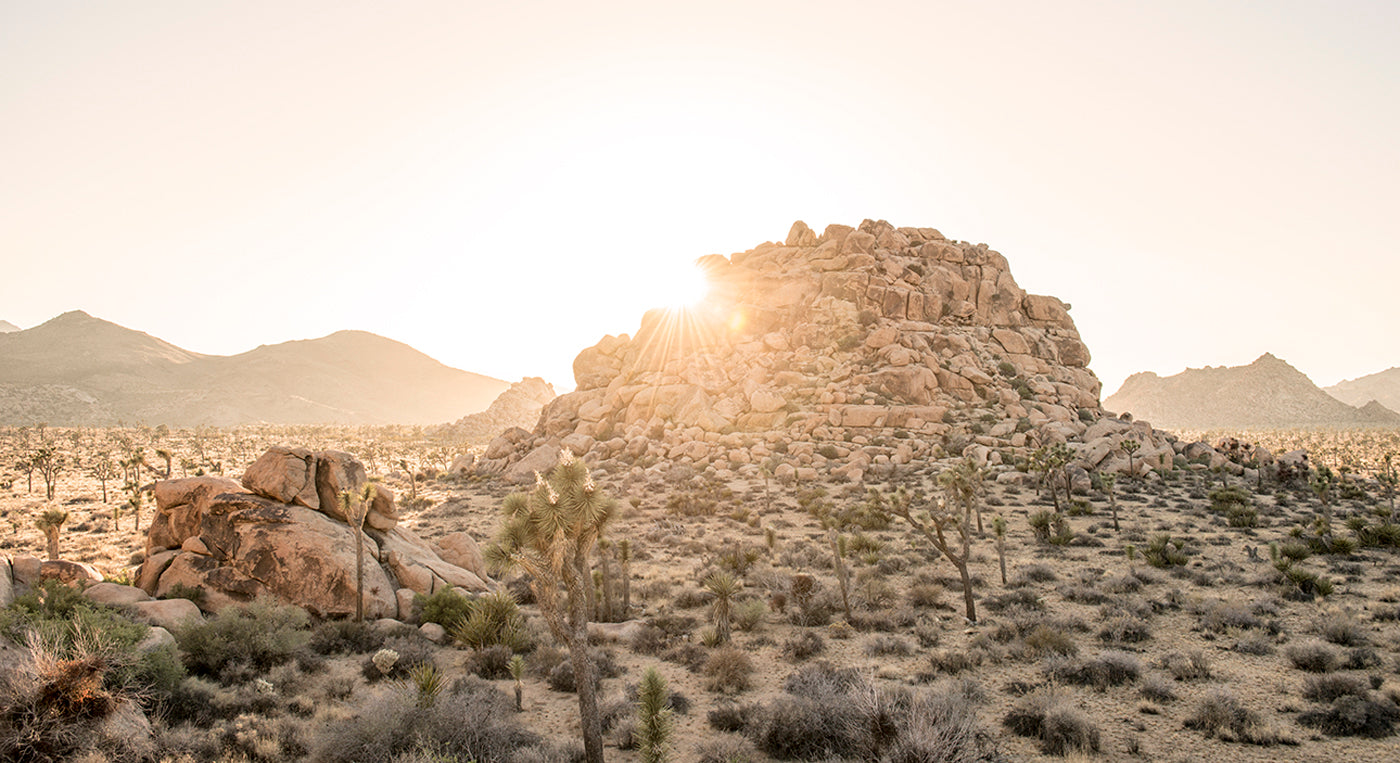 Best California and Joshua Tree Adventure Blog