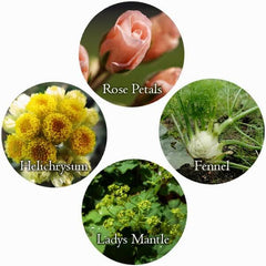 Herbs for The SKin