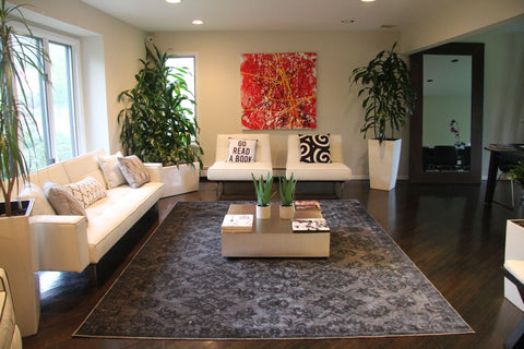 Area rug, Home dynamix, houseplant