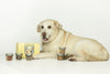 Yellow lab retriever poses with Drool Central's Introductory Pack
