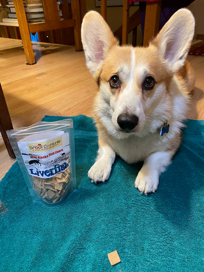 Corgi, Jago, loves Liverfish Training Treats for years now.