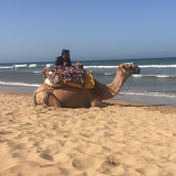 Camel on beach in Morocco