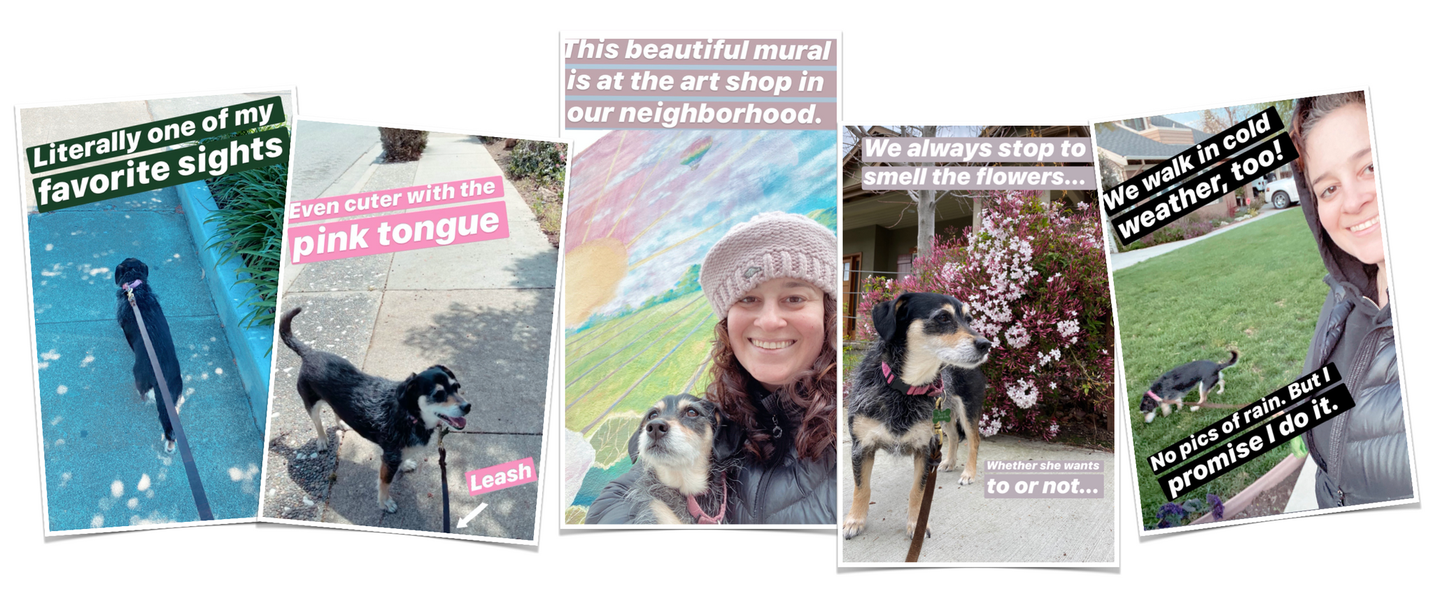 Walking my dog | Brindle Market