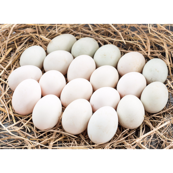 Duck Eggs - 1 Dozen