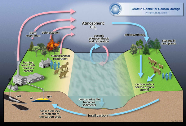 Photosynthesis Carbon Sequestration Cycle