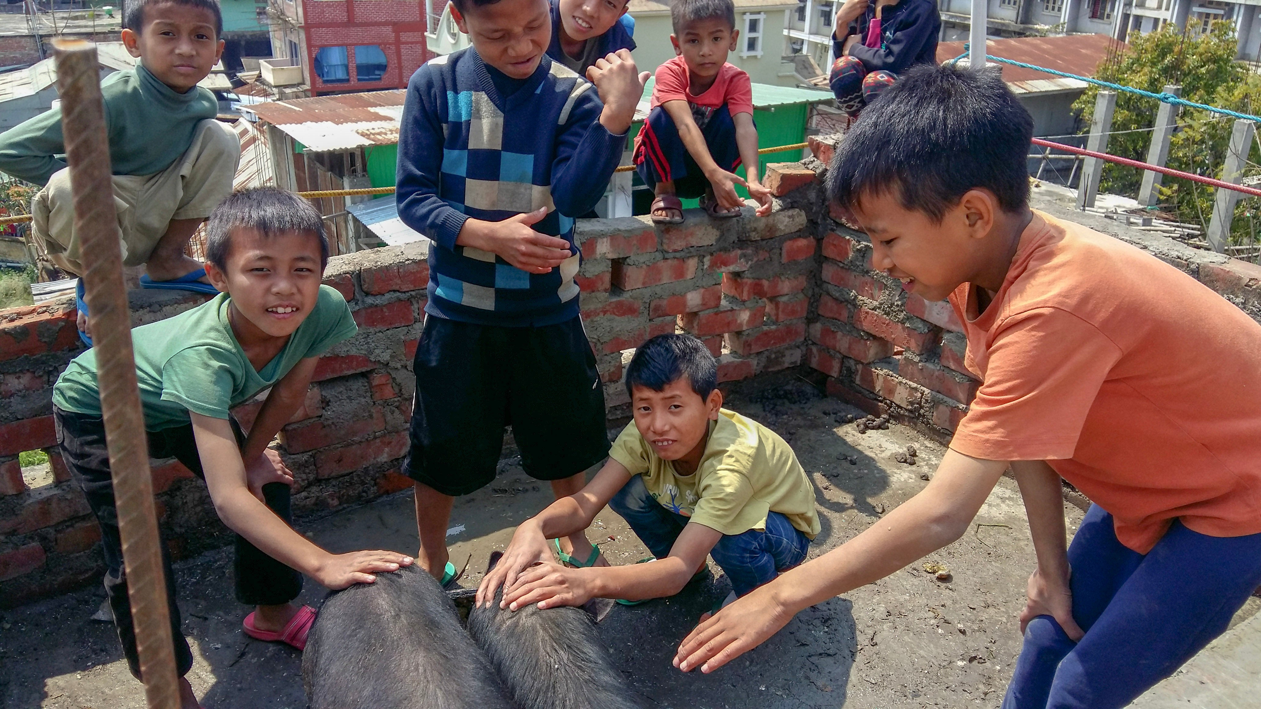 Ice Age Meals Get One Give One India Orphanage Pigs
