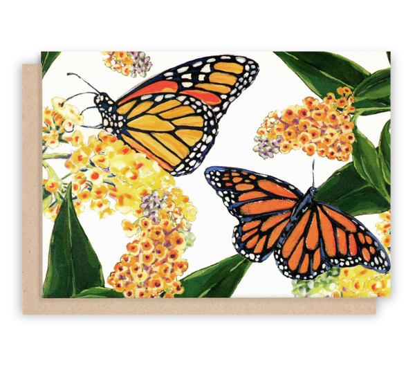 Monarch Butterfly Note Cards with White Background