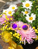 Eye See FlowerZ Sunglasses