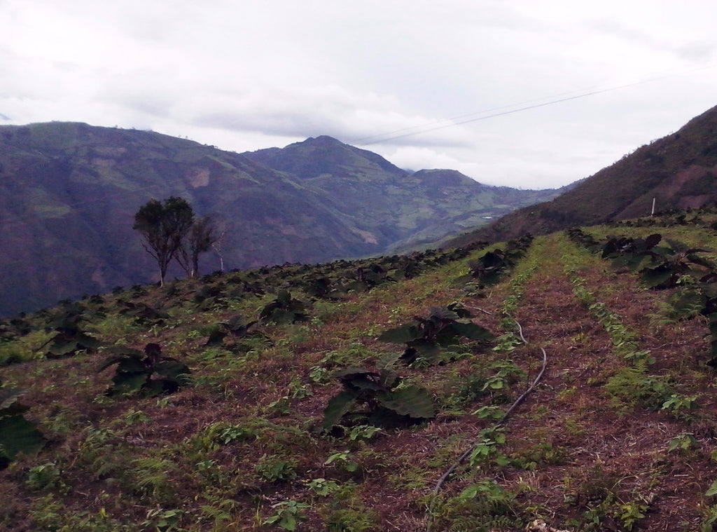 Colombia Nariño, Geovany Gualguan