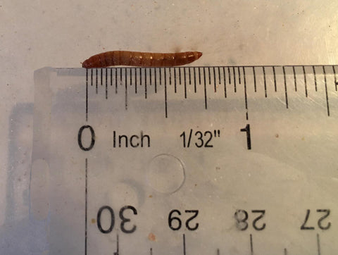 Mealworm test
