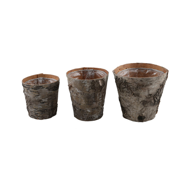 Birch Pots: Natural