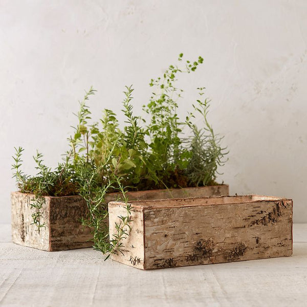 Birch: Trough / Planter Plain