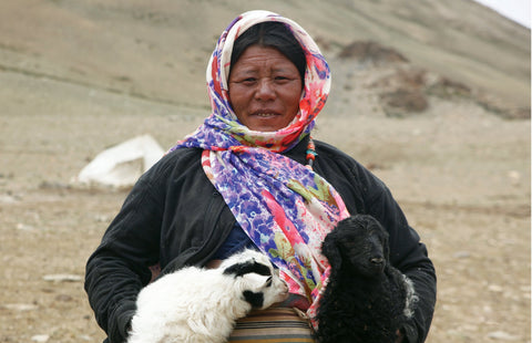 Changpa Tribes of Ladakh
