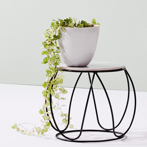 IVY MUSE BUTTON PLANT STAND IN BLACK