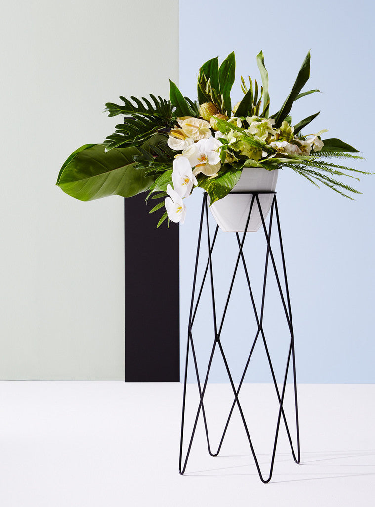 IVY MUSE HARLEQUIN PLANT STAND IN BLACK