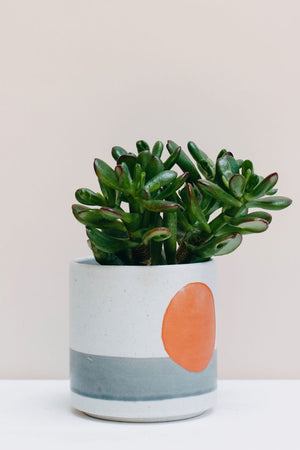 Harvest Moon planter