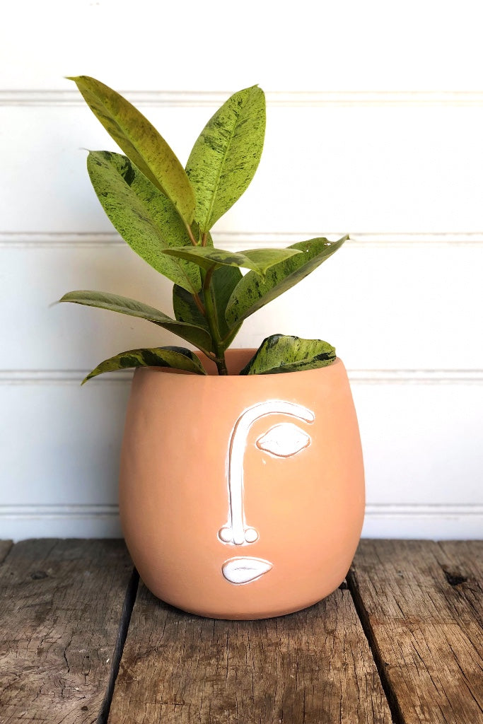 Terracotta Face Planter with white detail