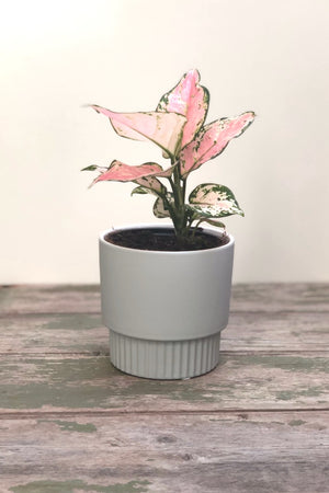 Veneto Planter Grey