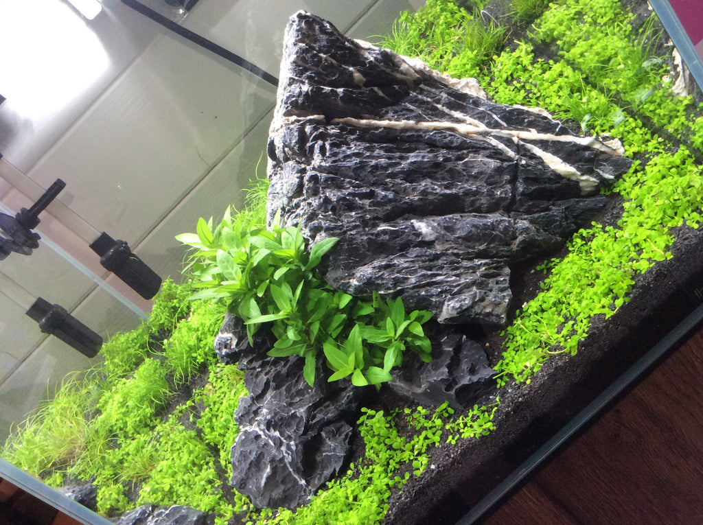 What is an Iwagumi Scape?